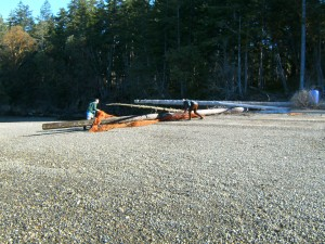 Eric Sparkman and Levi Keesecker from Natural Resources removing washed up net from Squaxin Island