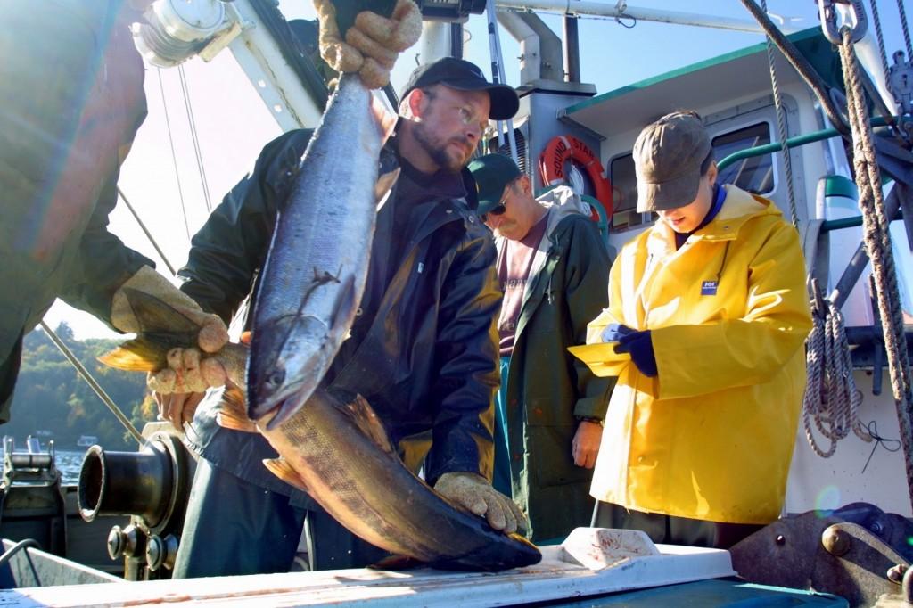 Salmon test fishery 4